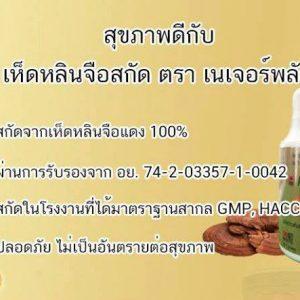 Reishi Mushroom Extract by Nature Plus5