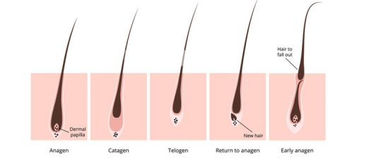 lafolie hair growth serum how to use